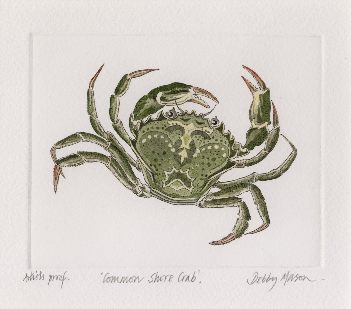 common shore crab crustaceans small prints hand coloured etching
