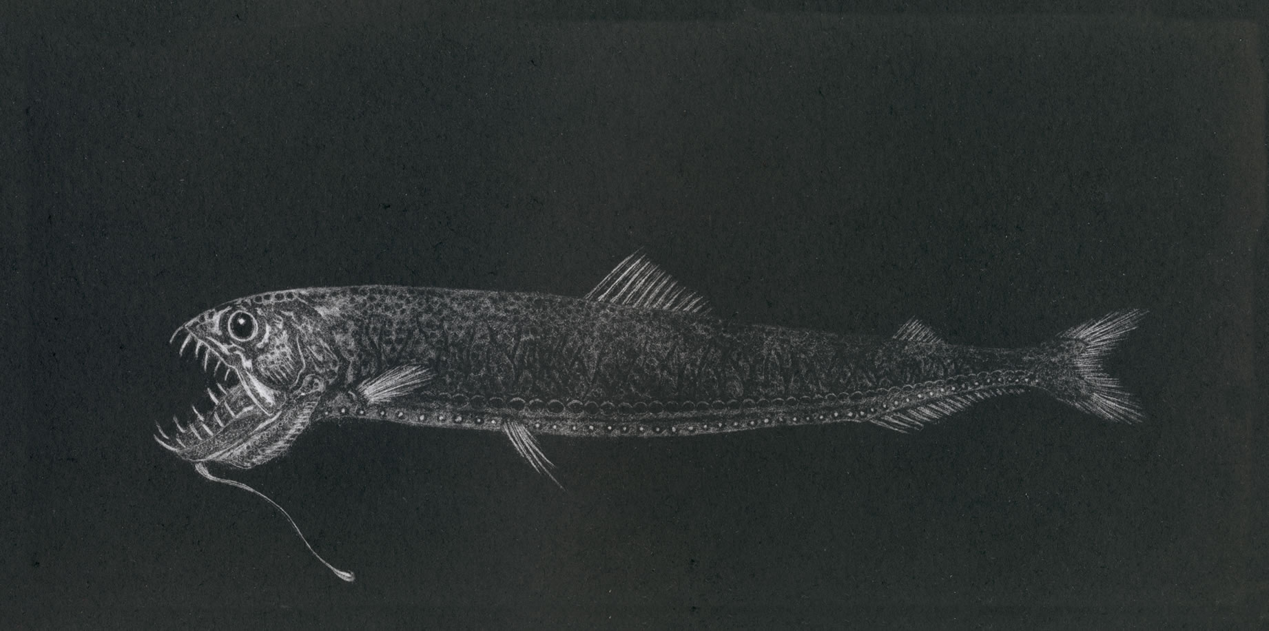 Dragonfish the twilight zone medium prints hand for Freshwater dragon fish