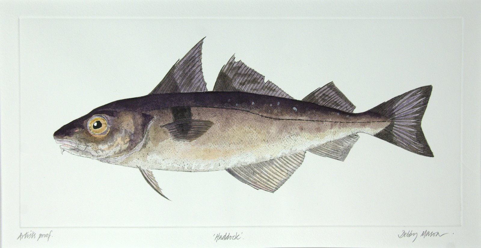 haddock   salt water fish uk medium prints hand coloured