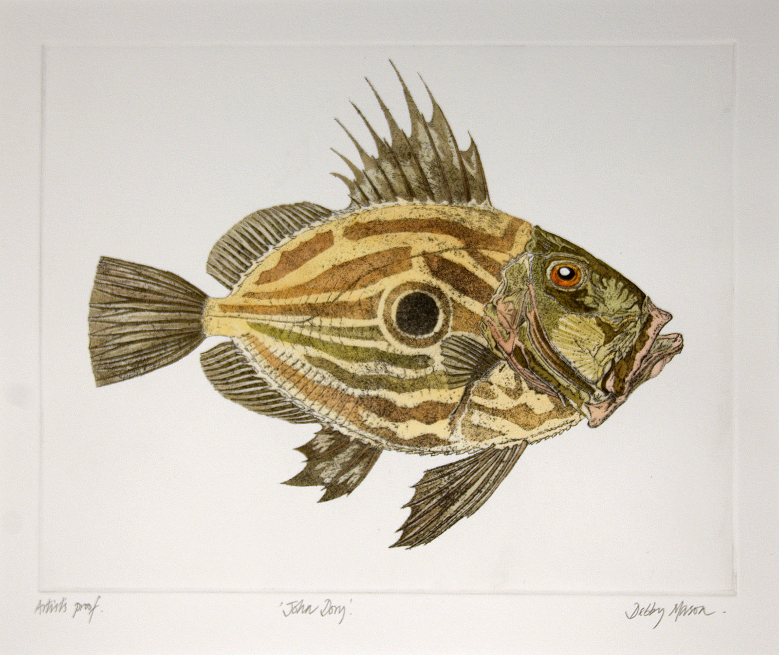 John dory salt water fish uk large prints hand for Picture of dory fish