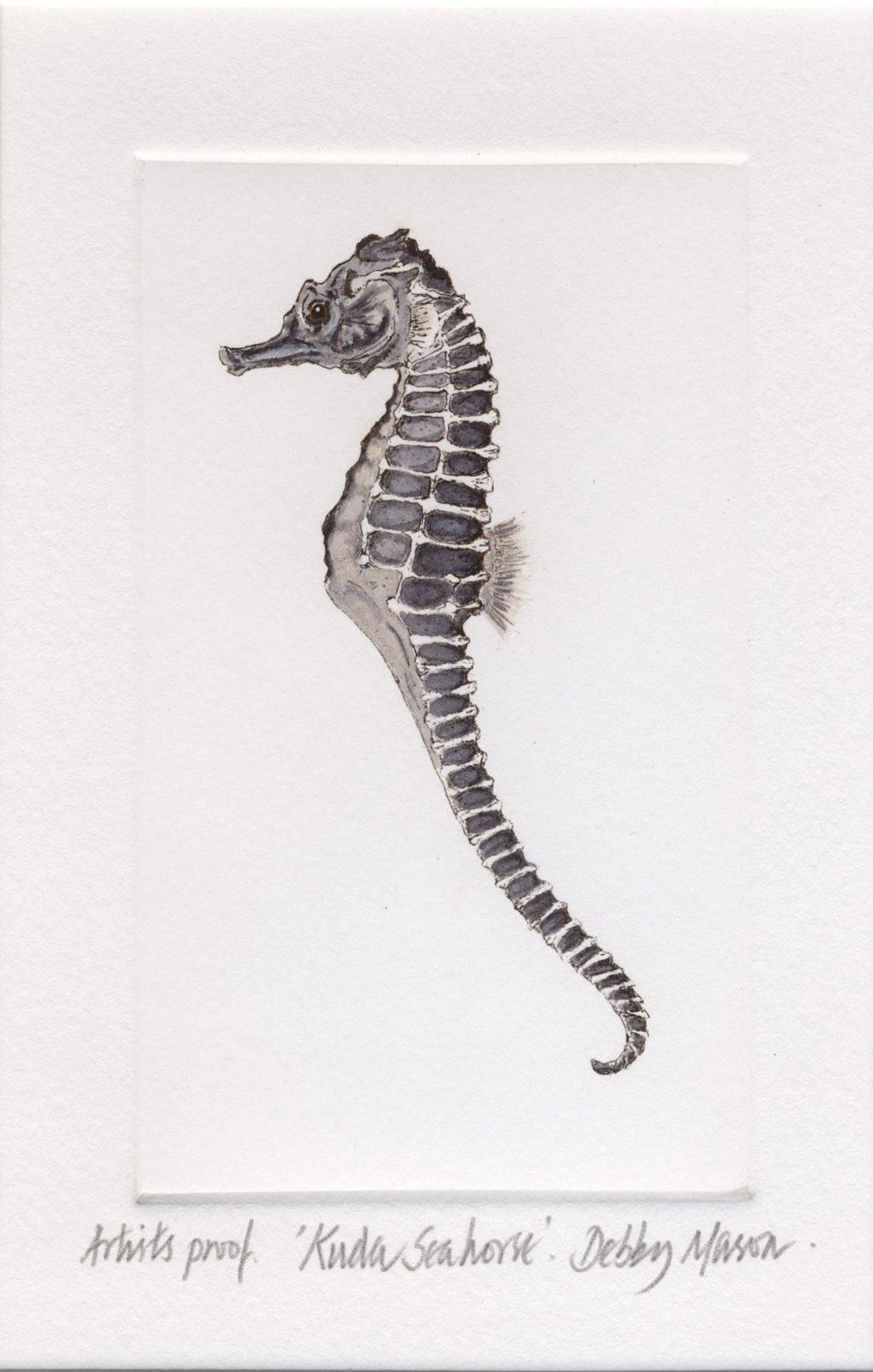 Kuda Seahorse (Hippocampus kuda) - Sea Horses Small Prints ...