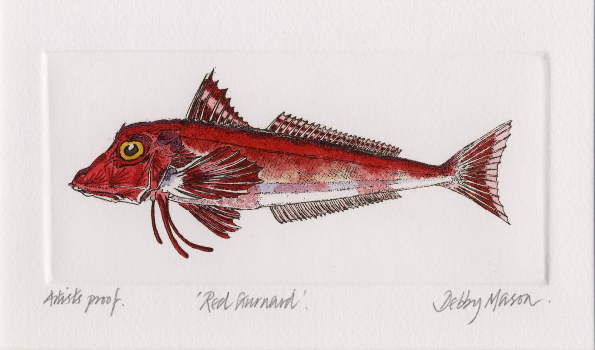 Red gurnard salt water fish uk small prints hand for Red saltwater fish