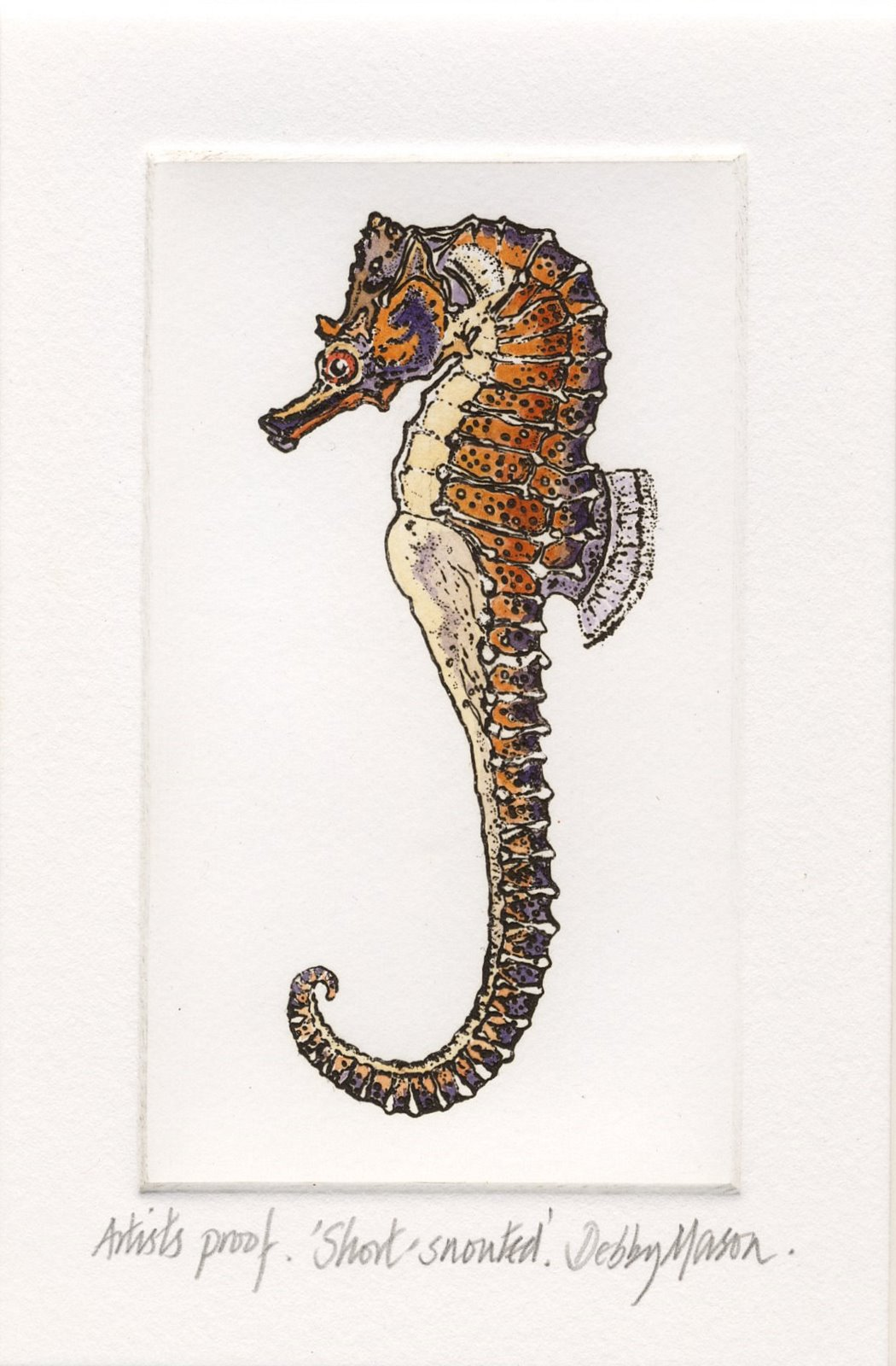 Short Snouted Sea Horse (H.hippocampus) - Sea Horses Small Prints ...