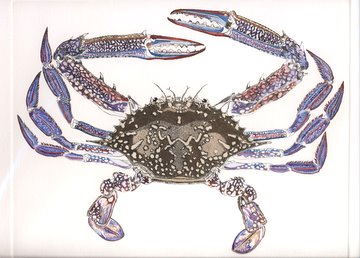 Blue Crab in 'Crustaceans'