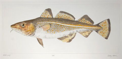Cod in 'Salt Water Fish (UK)'