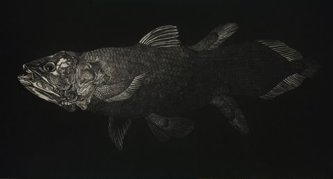 Coelacanth in 'Coral Seas'