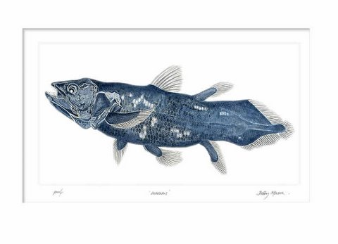 Coelacanth Blue in 'Coral Seas'