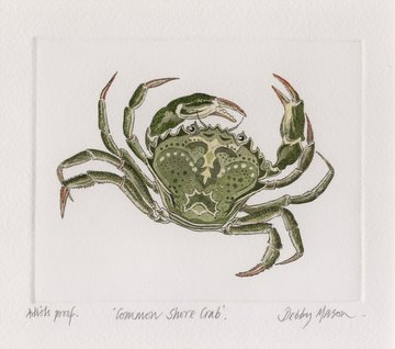 Common Shore Crab in 'Crustaceans'