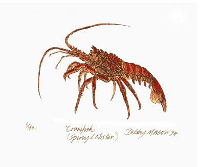 Crawfish (Spiny Lobster) in 'Crustaceans'