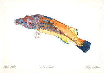 Cuckoo Wrasse in 'Salt Water Fish (UK)'