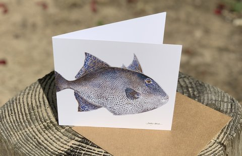 Grey Triggerfish Greetings Card
