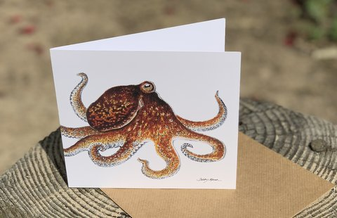 Common Octopus Greetings Card