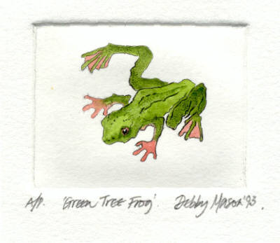 Green Tree Frog in 'Amphibians'