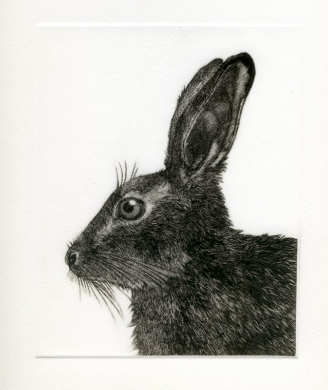 Hare (From 'The Game Cook') in 'Mammals'