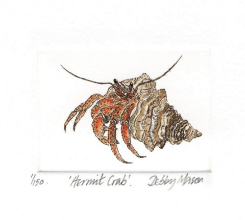 Hermit Crab in 'Crustaceans'