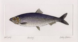 Herring in 'Salt Water Fish (UK)'