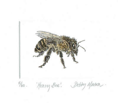 Honey Bee in 'Insects'