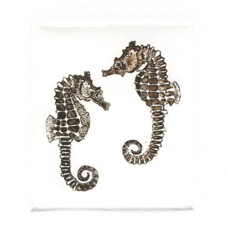 Knobby Sea Horse in 'Sea Horses'