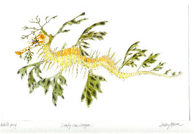 Leafy Sea Dragon in 'Sea Dragons'