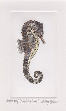 Lined Seahorse (Hippocampus erectus) in 'Sea Horses'