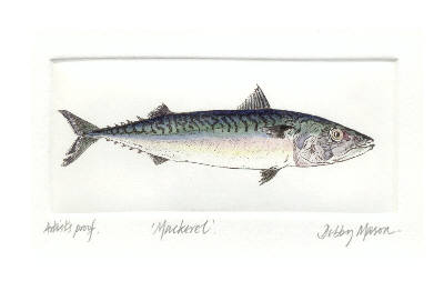Mackerel in 'Salt Water Fish (UK)'