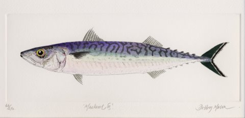 Mackerel III in 'Salt Water Fish (UK)'