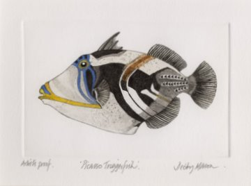 Picasso Triggerfish in 'Coral Seas'