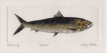 Pilchard in 'Salt Water Fish (UK)'