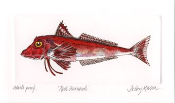 Red Gurnard in 'Salt Water Fish (UK)'