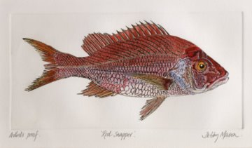 Red Snapper in 'Coral Seas'