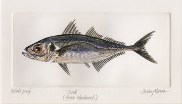 Scad (Horse Mackerel) in 'Salt Water Fish (UK)'