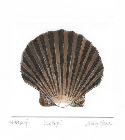 Scallop in 'Molluscs'