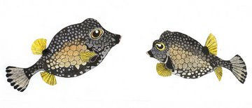 Smooth Trunkfish in 'Coral Seas'