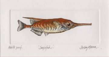 Snipefish in 'Salt Water Fish (UK)'