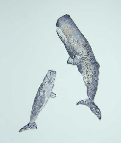 Sperm Whales in 'Cetaceans'