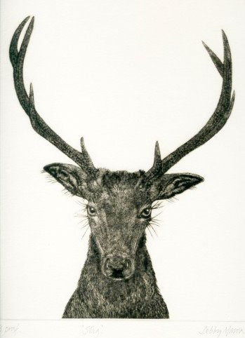 Stag (From 'The Game Cook') in 'Mammals'