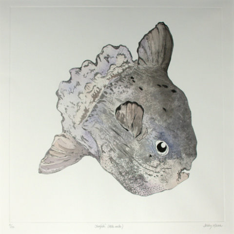 Sunfish Large in 'Salt Water Fish (UK)'