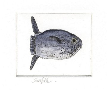 Sunfish Small in 'Salt Water Fish (UK)'