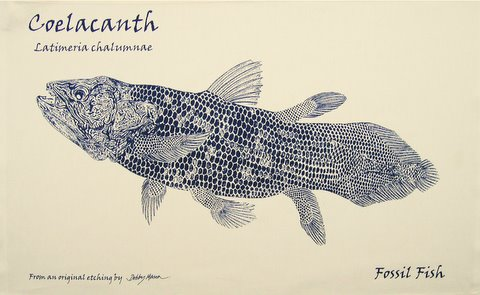 Coelacanth Tea Towel in 'My Designs'