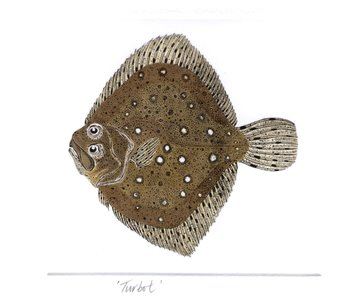 Turbot in 'Salt Water Fish (UK)'
