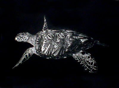 Turtle in 'Reptiles'