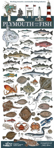 Plymouth & Its Fish Poster (50 Species) in 'My Designs'
