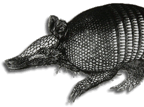 an image of an armadillo